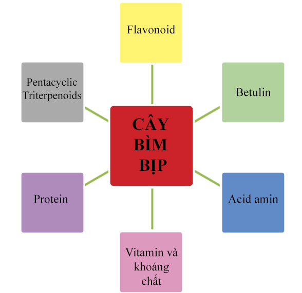 cay-bim-bip-2