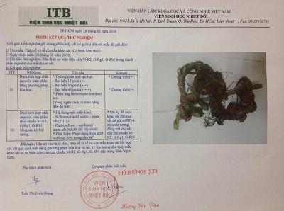 giấy kiểm định chất lượng sâm ngọc linh kontum tại cty Nguyên Trần