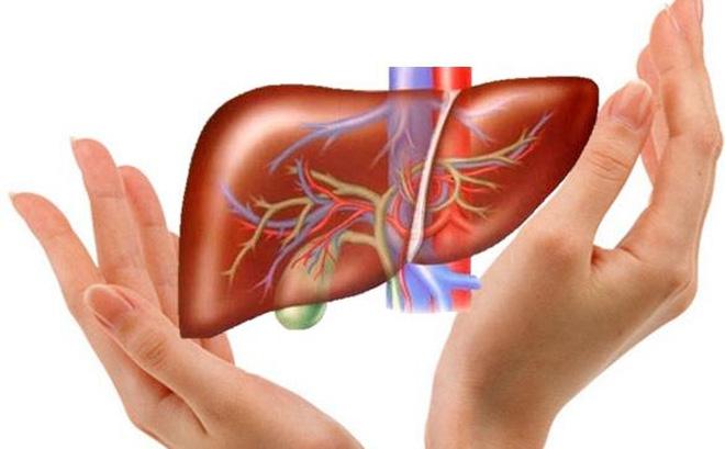 Cây an xoa điều trị gan