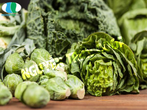 Thực phẩm cải thiện sức đề kháng người cao tuổi 1