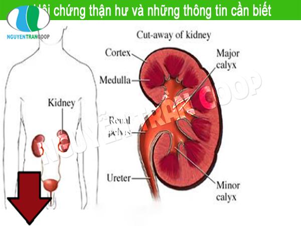 hoichunghuthan-ntc.com2