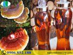 Có nên uống Nấm Lim Xanh ngâm rượu để nâng cao sức khỏe?