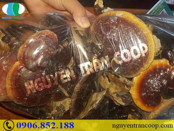 Một số bài thuốc kết hợp Nấm Lim Xanh trong chữa bệnh